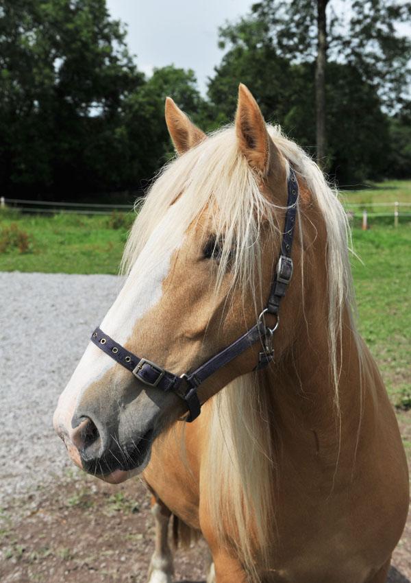 holistic horse camps